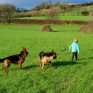 Babysitter required in Burnfort, Cork, Ireland